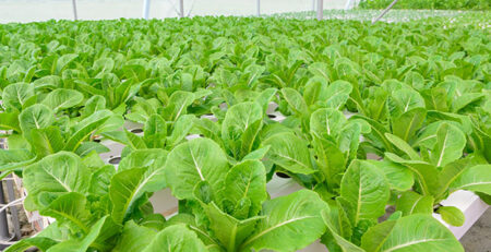 The Prepper's Guide to Aquaponics: Urban and Soil-less Food for When SHTF